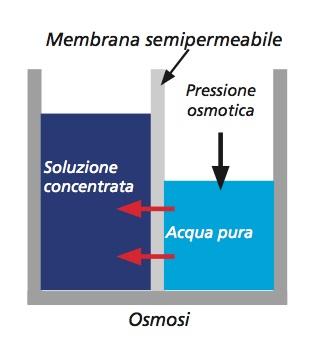Il processo dell'osmosi nelle soluzioni